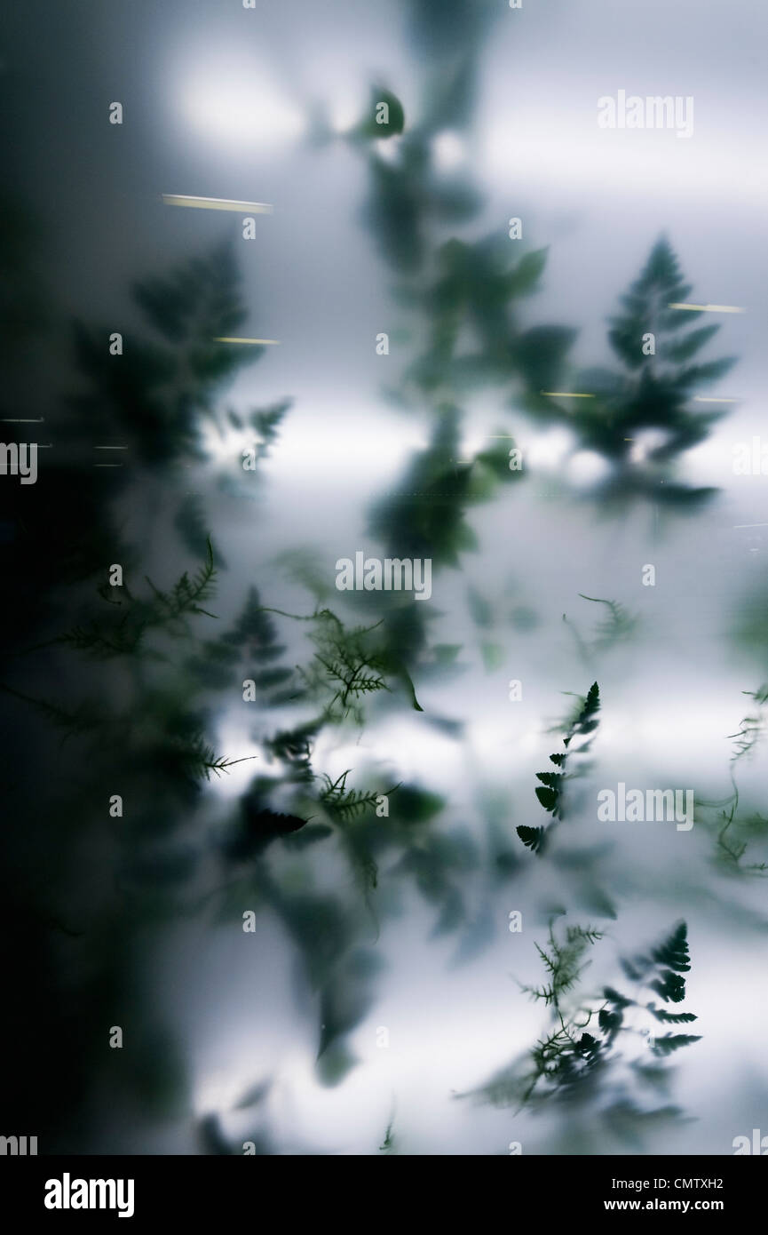 Indoor plant behind acrylic glass - Stock Image