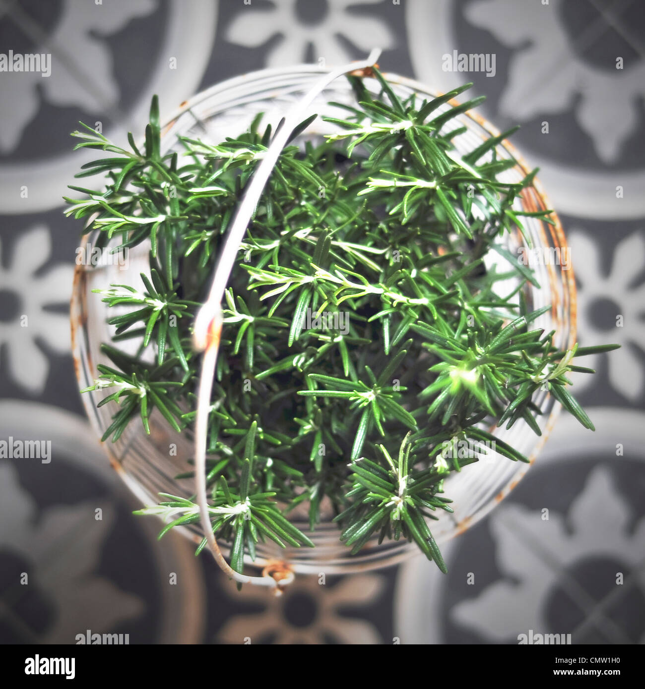 Close-up of green herb in basket - Stock Image
