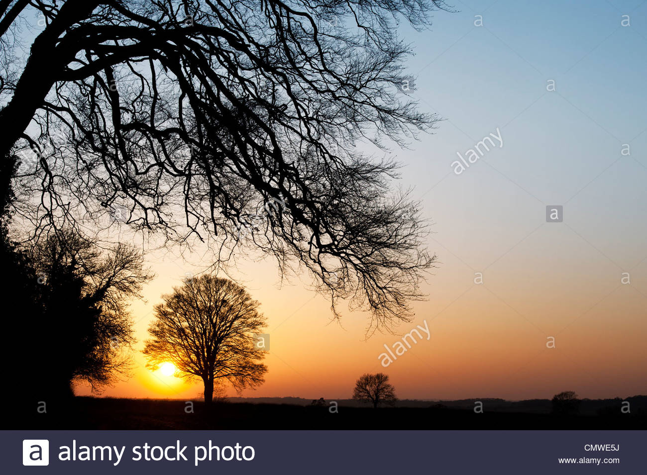 Quercus. Oak Tree sunset silhouette in the English countryside - Stock Image