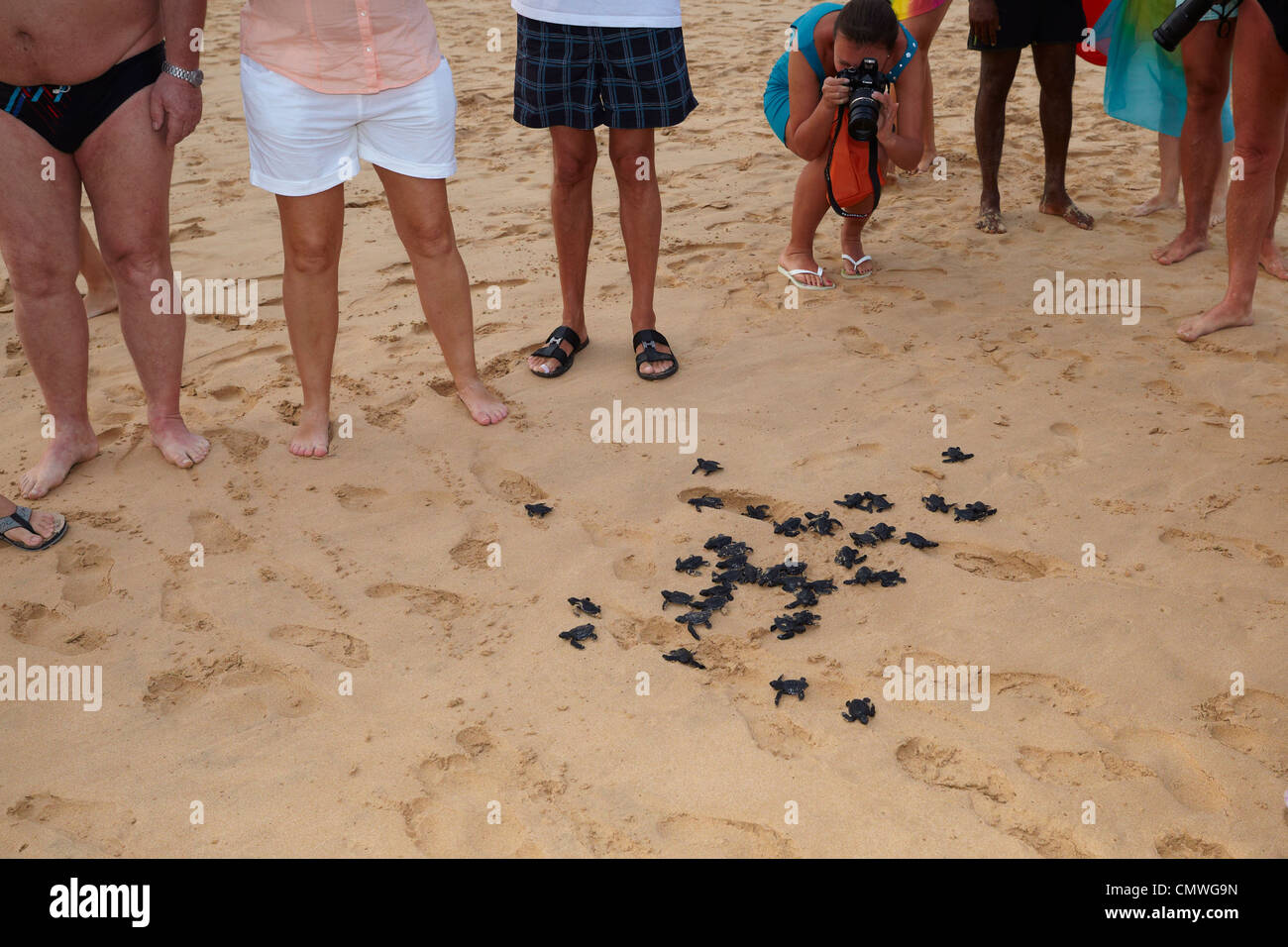Sri Lanka - Koggala beach, village near Galle, young turtles hatchery realised into the ocean - Stock Image