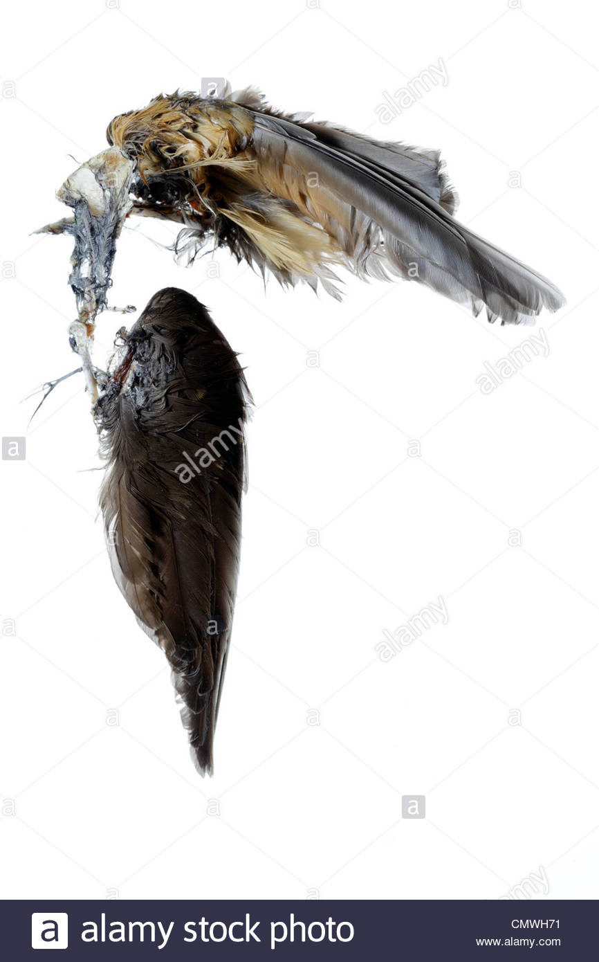 Bird Wing Anatomy Cut Out Stock Images & Pictures - Alamy