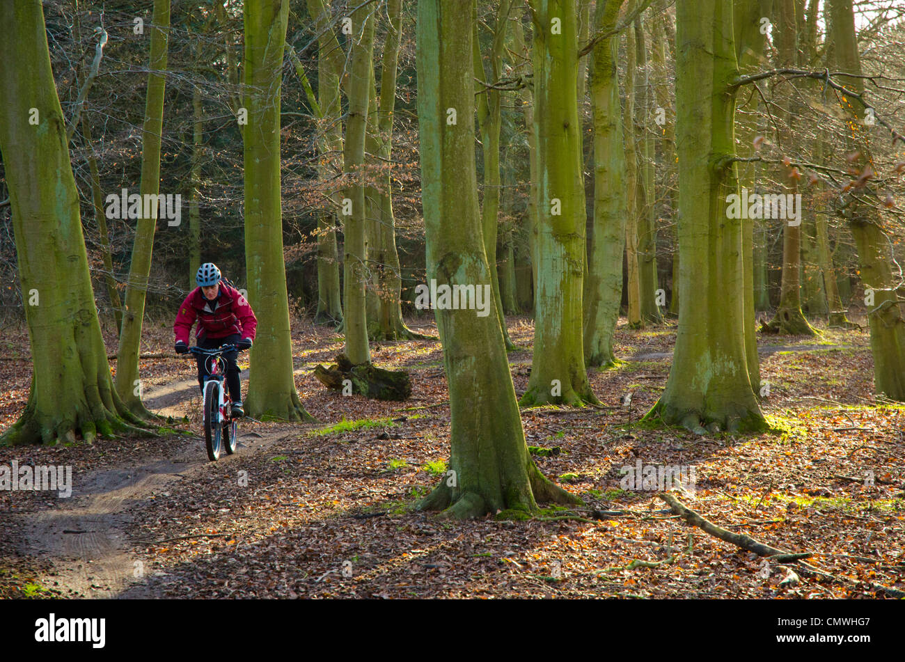 "Female mountain biker on the ""Red"" trail in Thetford Forest on the Norfolk-Suffolk border - Stock Image"