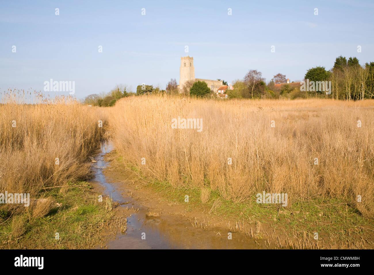 Blyhburgh church seen through marshland reeds, Suffolk, England - Stock Image