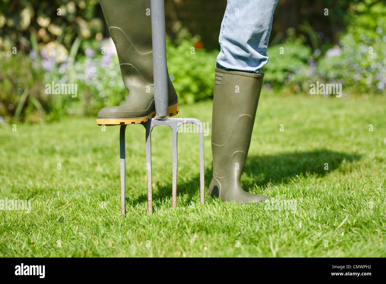 Woman aerating the garden lawn with a digging fork - Stock Image