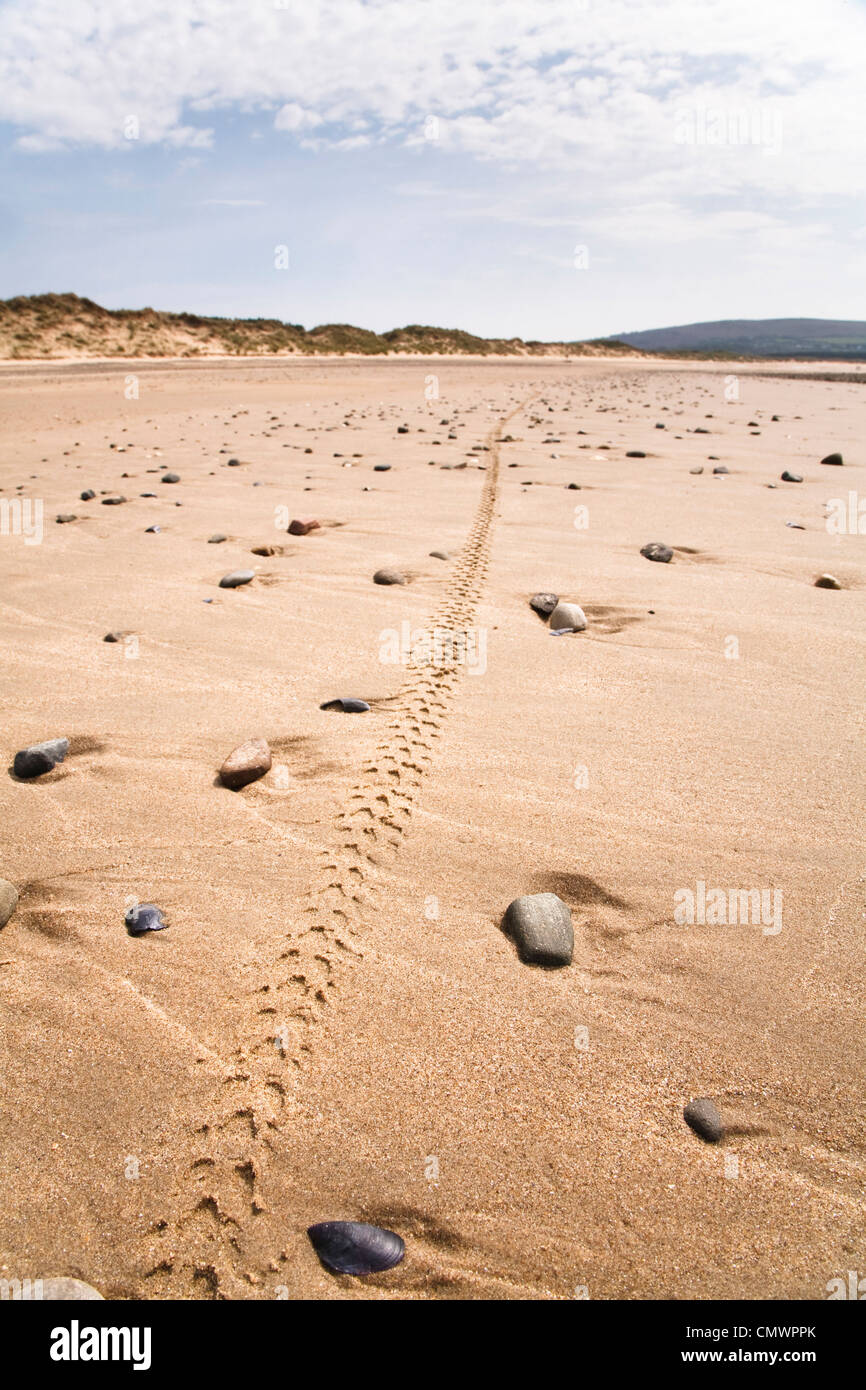 Single mountain bike tyre track along a remote beach in Wales - Stock Image
