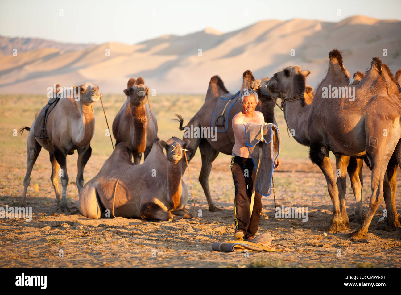 The man care of his camel at Khongor sand dune, Gobi desert, Mongolia - Stock Image