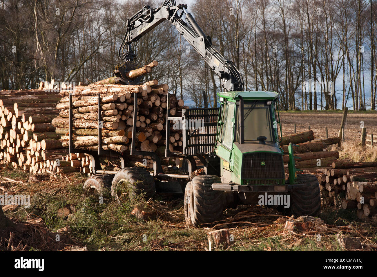 Stacking up felled timber from a pine plantation in Stirlingshire, Scotland - Stock Image