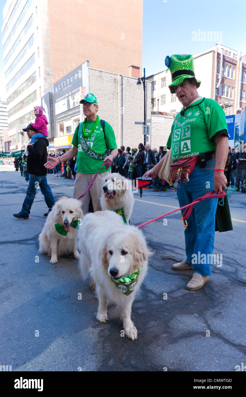 SPCA workers with Great Pyrénées dogs at 2012 St Patrick's