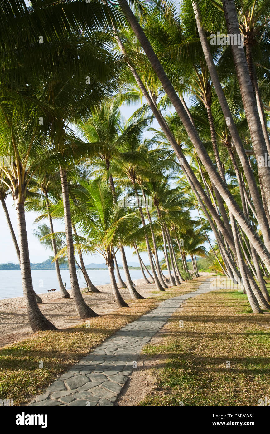Palm trees along beachfront at Palm Cove, Cairns, Queensland, Australia - Stock Image