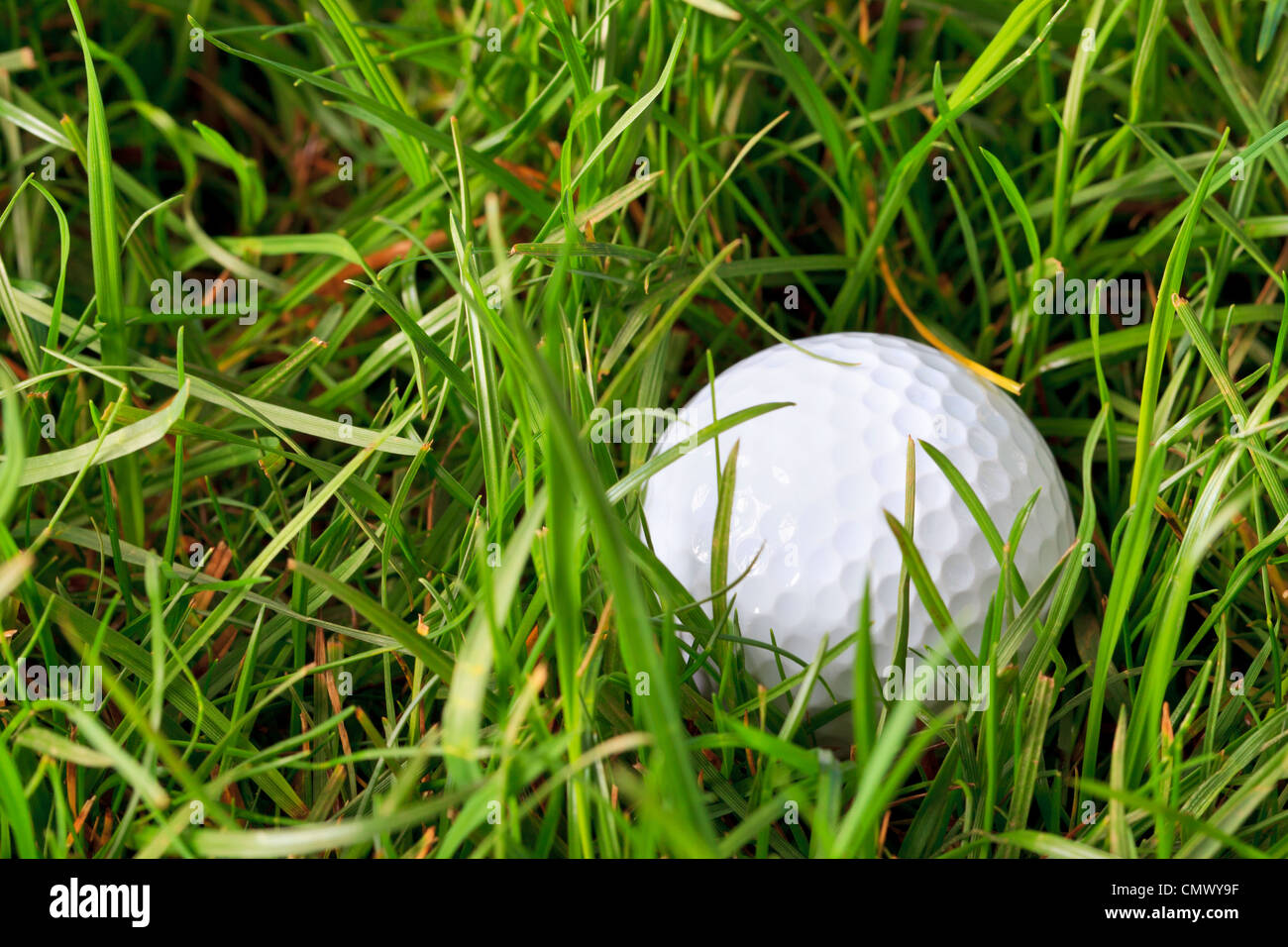 Photo of a golf ball lying in the rough grass - Stock Image