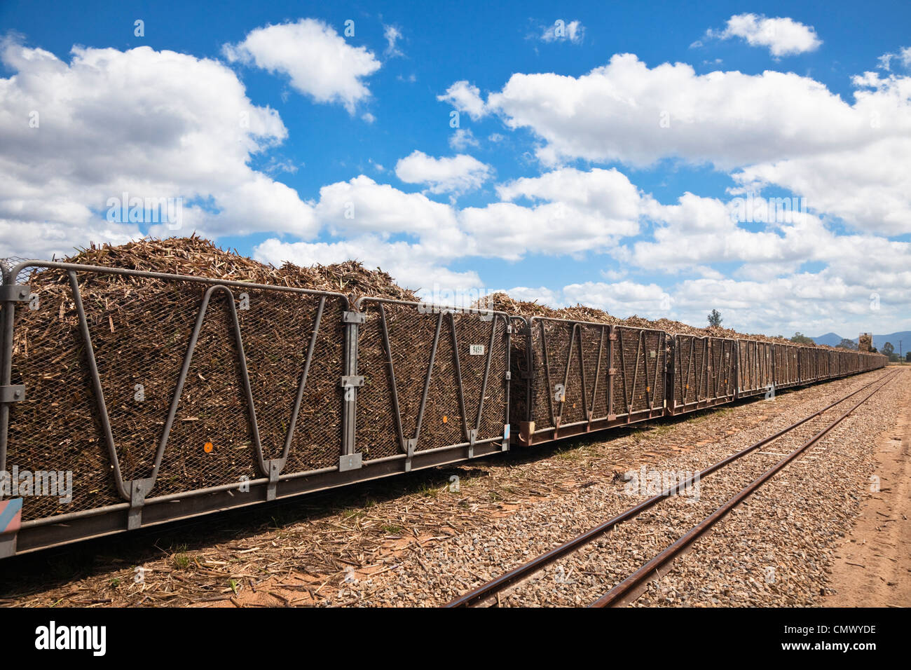 Harvested sugar cane loaded in bins ready to be transported to the sugar mill. Cairns, Queensland, Australia - Stock Image