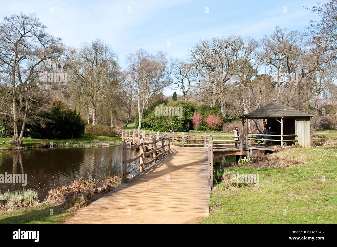 Savill Garden, Berkshire, England, UK - Stock Image