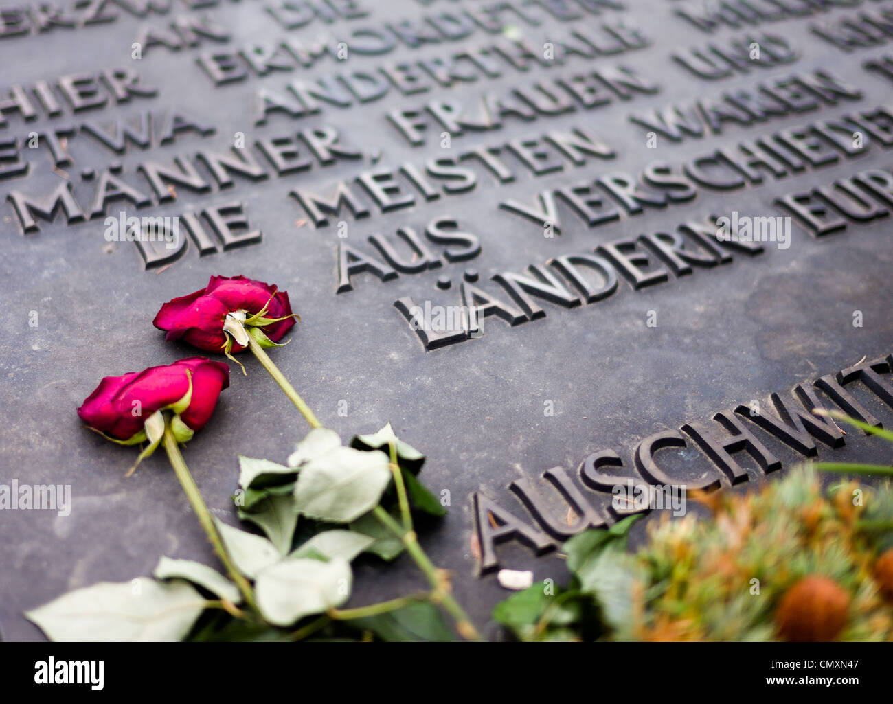 Red roses placed on the Auschwitz II, Birkenau memorial, Poland - Stock Image
