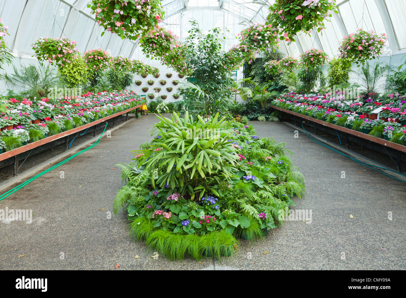 Display of plants in the conservatory in Hagley Park, Christchurch, New Zealand. - Stock Image