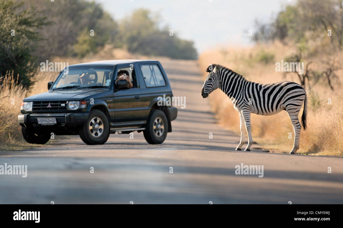 A zebra crossing a road in a safari park in Sun City, South Africa watched by tourists in their Mitsubishi 4x4 car. Stock Photo