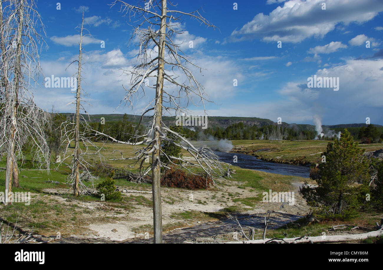 Tree, river, geysers and fumaroles, Yellowstone National Park,Wyoming - Stock Image