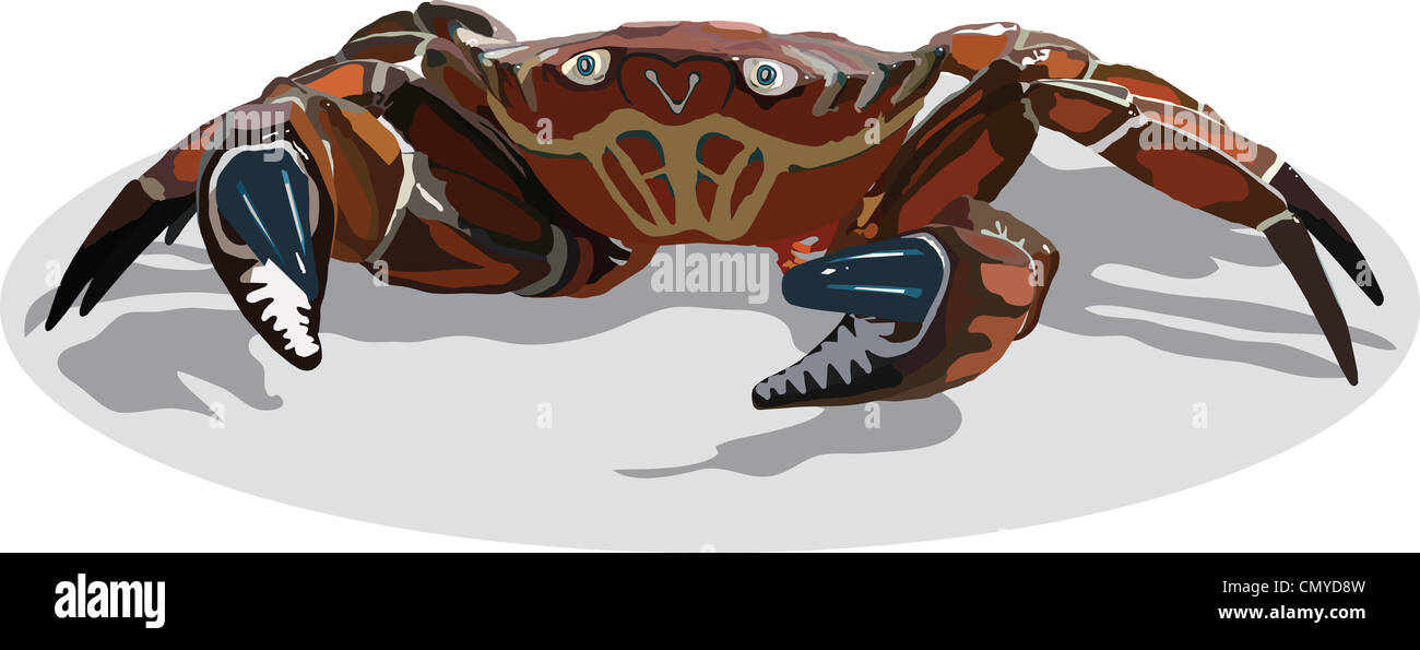 crab Stock Photo