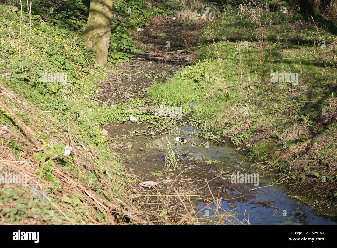 a stream in loughborough that is drying up due to drought - Stock Image