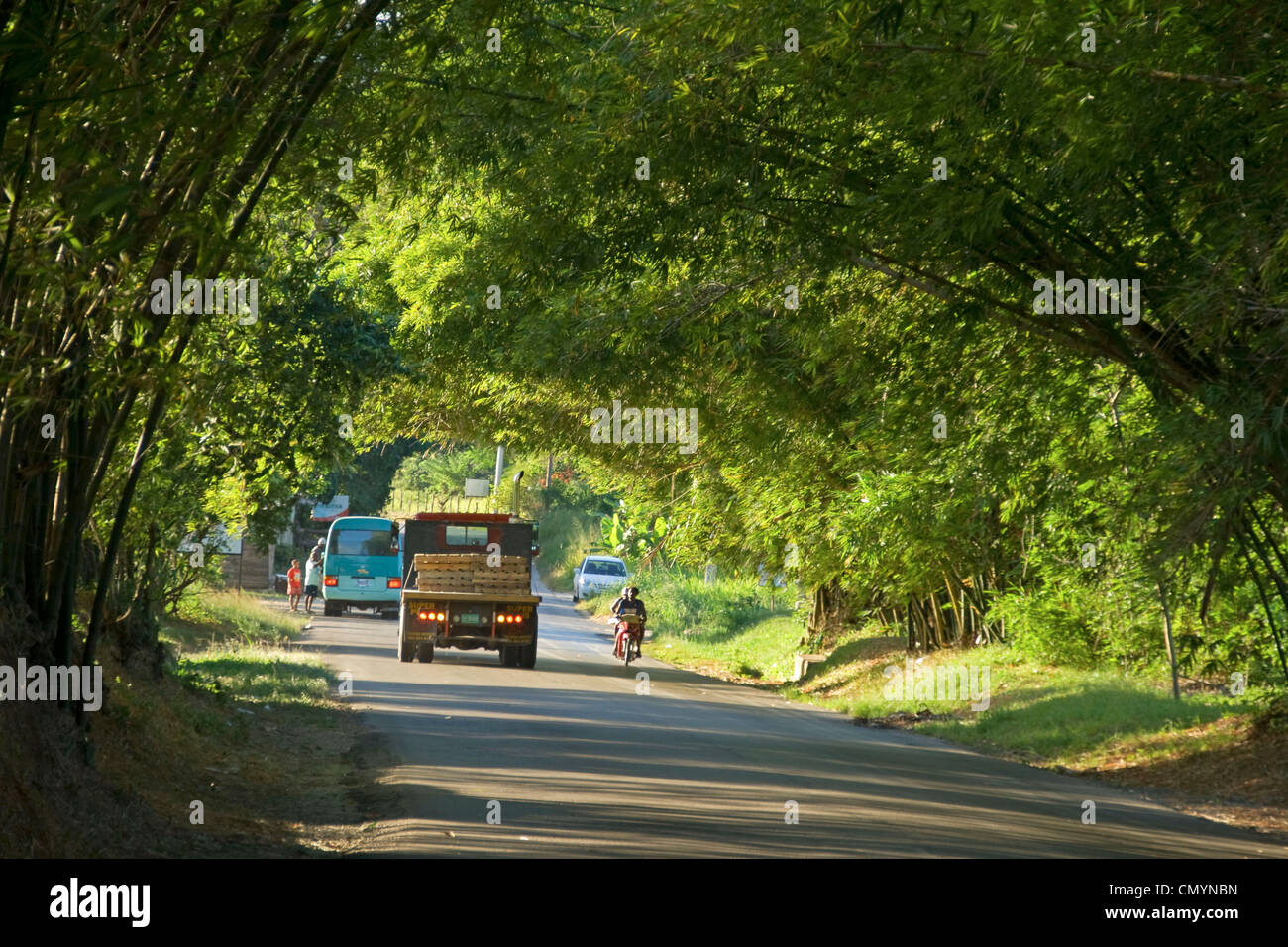 Jamaica St. Elisabeth Bamboo Avenue 2 1/2 miles long Bamboo trees overgrowing the road  like a tunnel - Stock Image