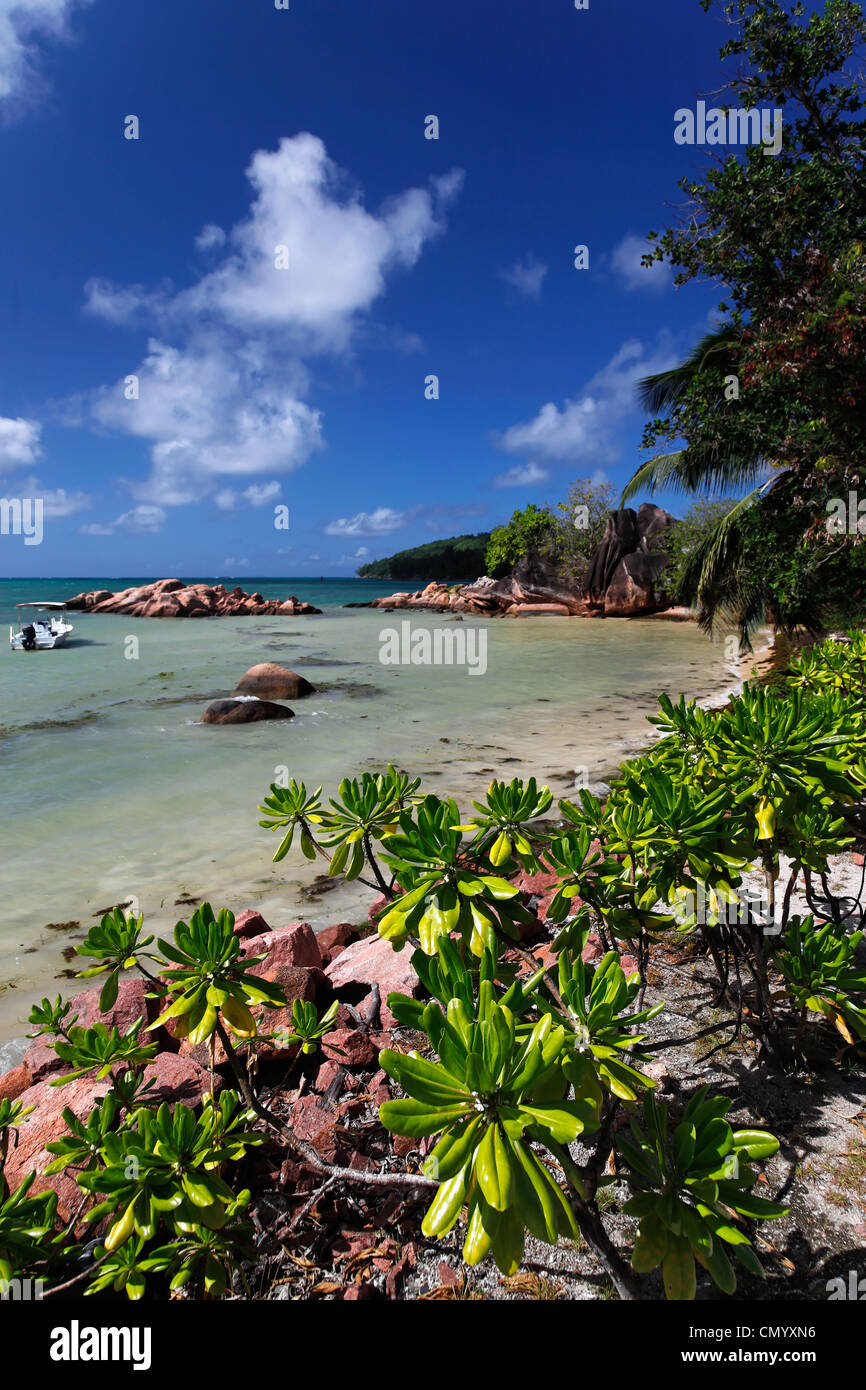 Sandy beach, Baie Ste Anne, Praslin, Seychelles, Indian Ocean - Stock Image