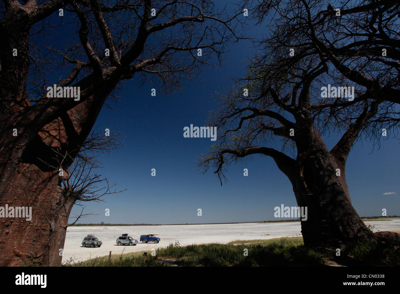 4X4 explorers park up by Baines baobabs in Nxai Pan National Park, Botswana. - Stock Image