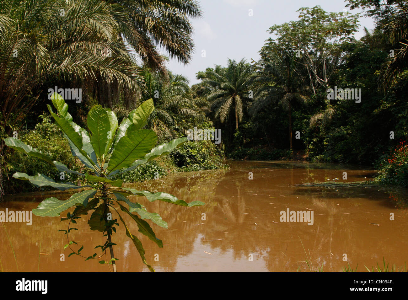A river running through the Lola Ya Bonobo sanctuary park just outside of Kinshasa. DRC. Central Africa. - Stock Image