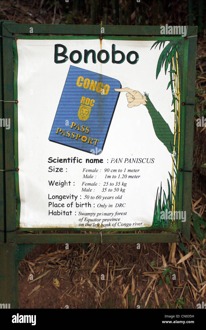 Information on the bonobo's at the Lola Ya bonobo sanctuary just outside of Kinshasa in the DRC, Central Africa - Stock Image