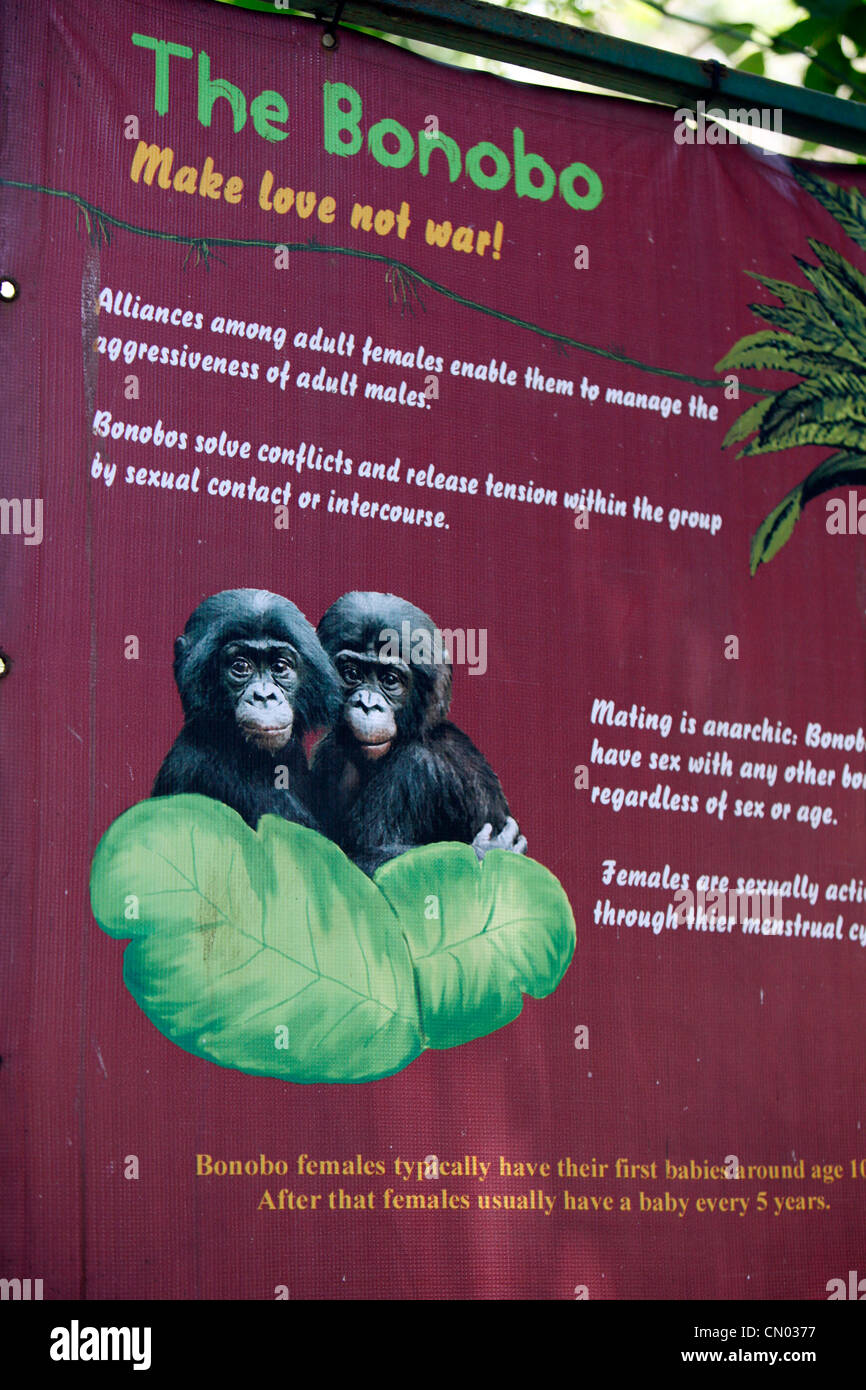 Information on the Bonobo apes at the Lola Ya Bonobo sanctuary park. DRC, Central Africa - Stock Image