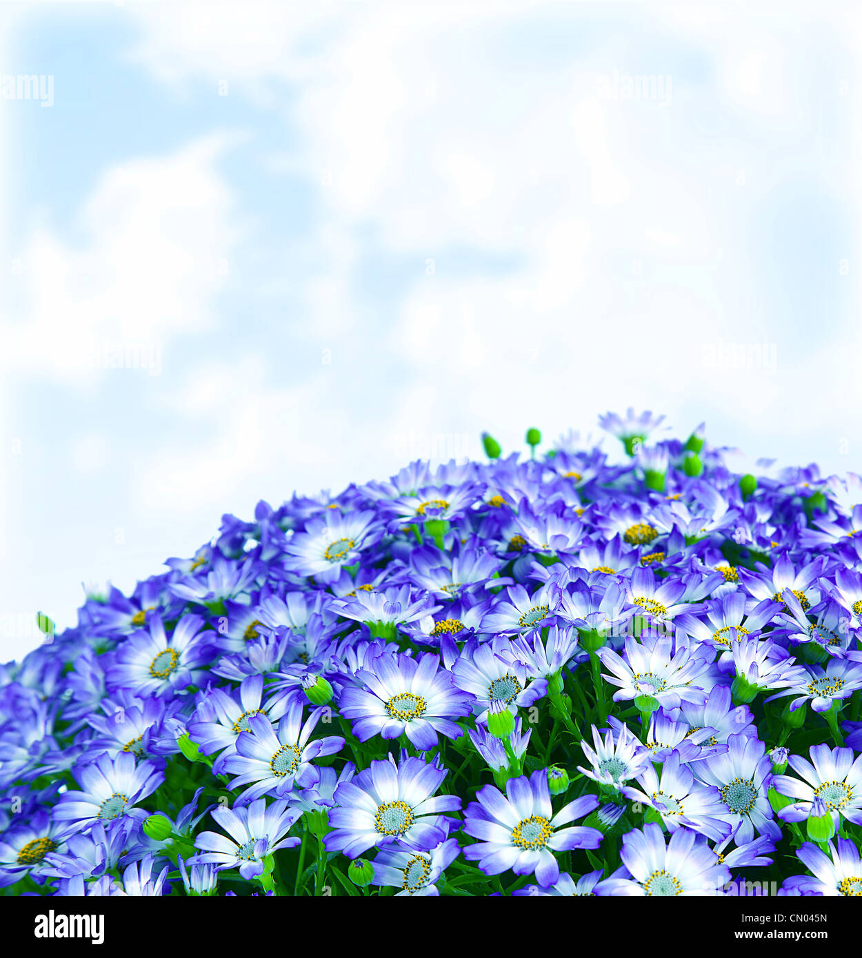 Floral daisy border, fresh spring blue blooming flowers over sky ...