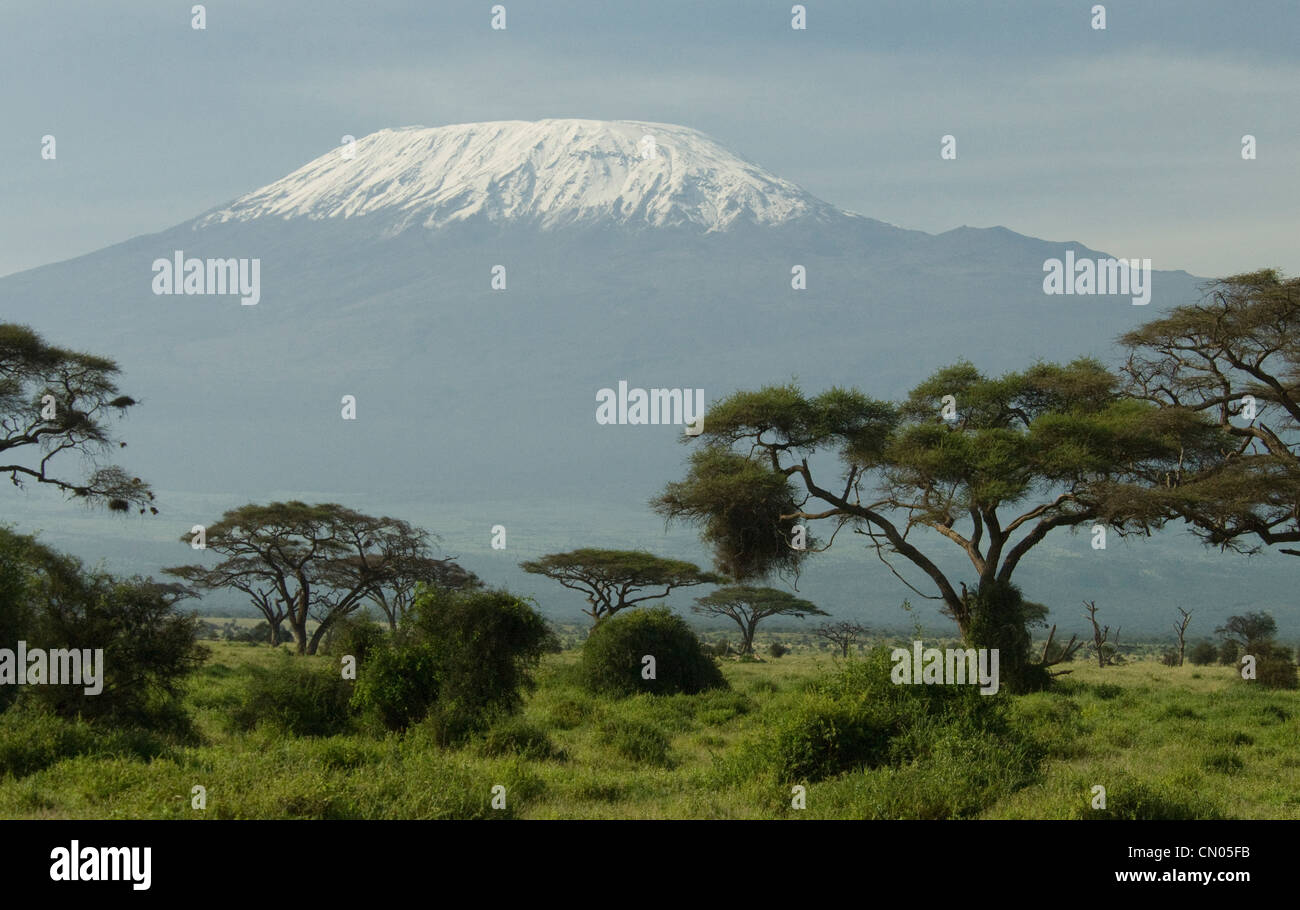Mount Kilimanjaro with acacia trees in the foreground - Stock Image