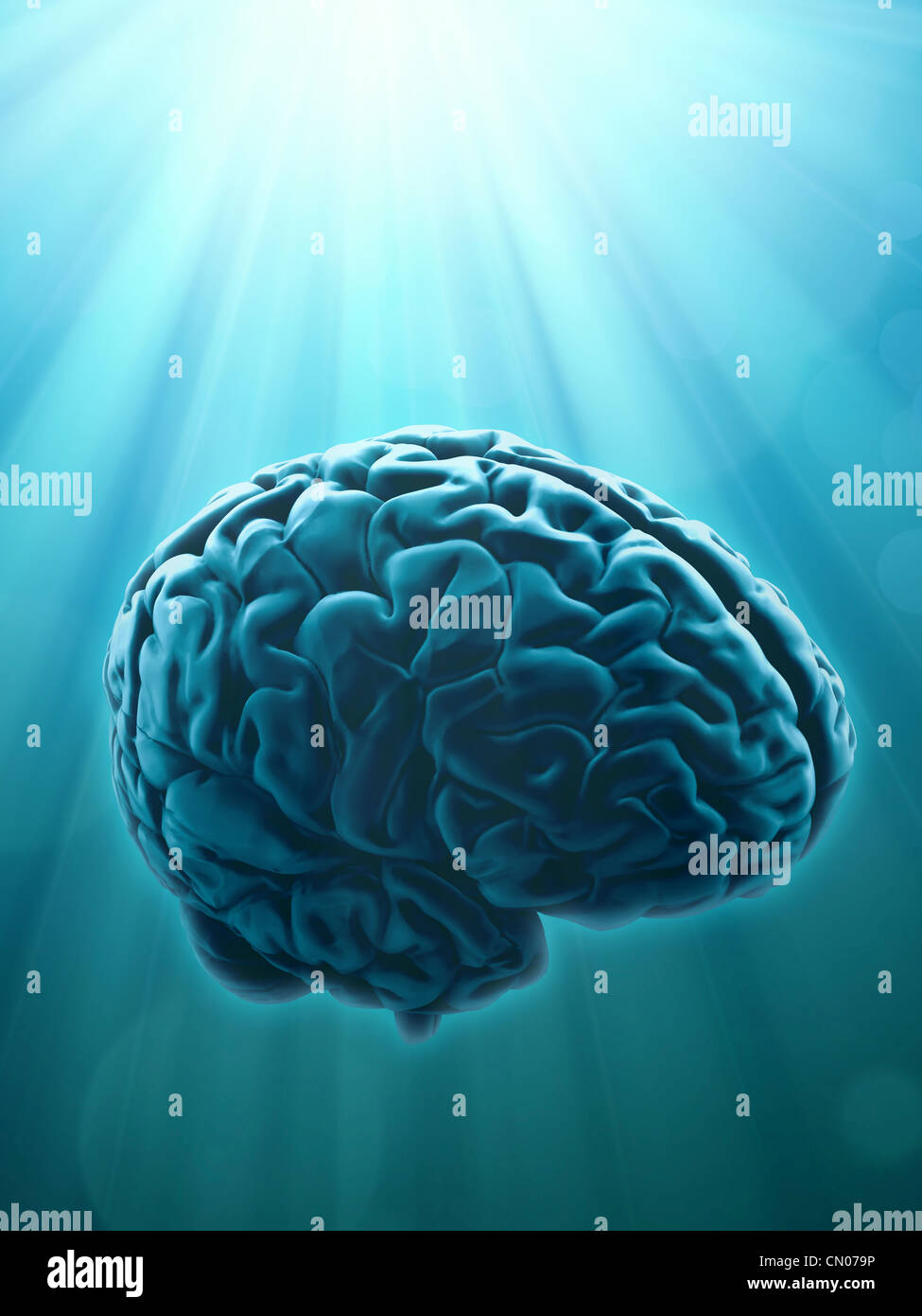 Knowledge and creativity concept illustration with human brain - Stock Image