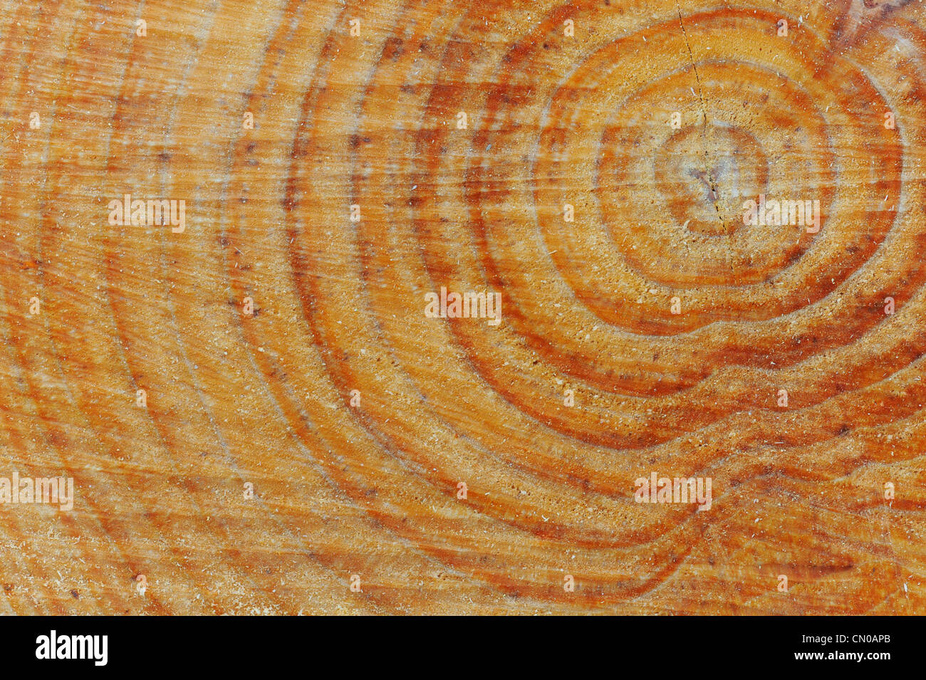 Tree rings. Sawn tree trunk pattern. - Stock Image