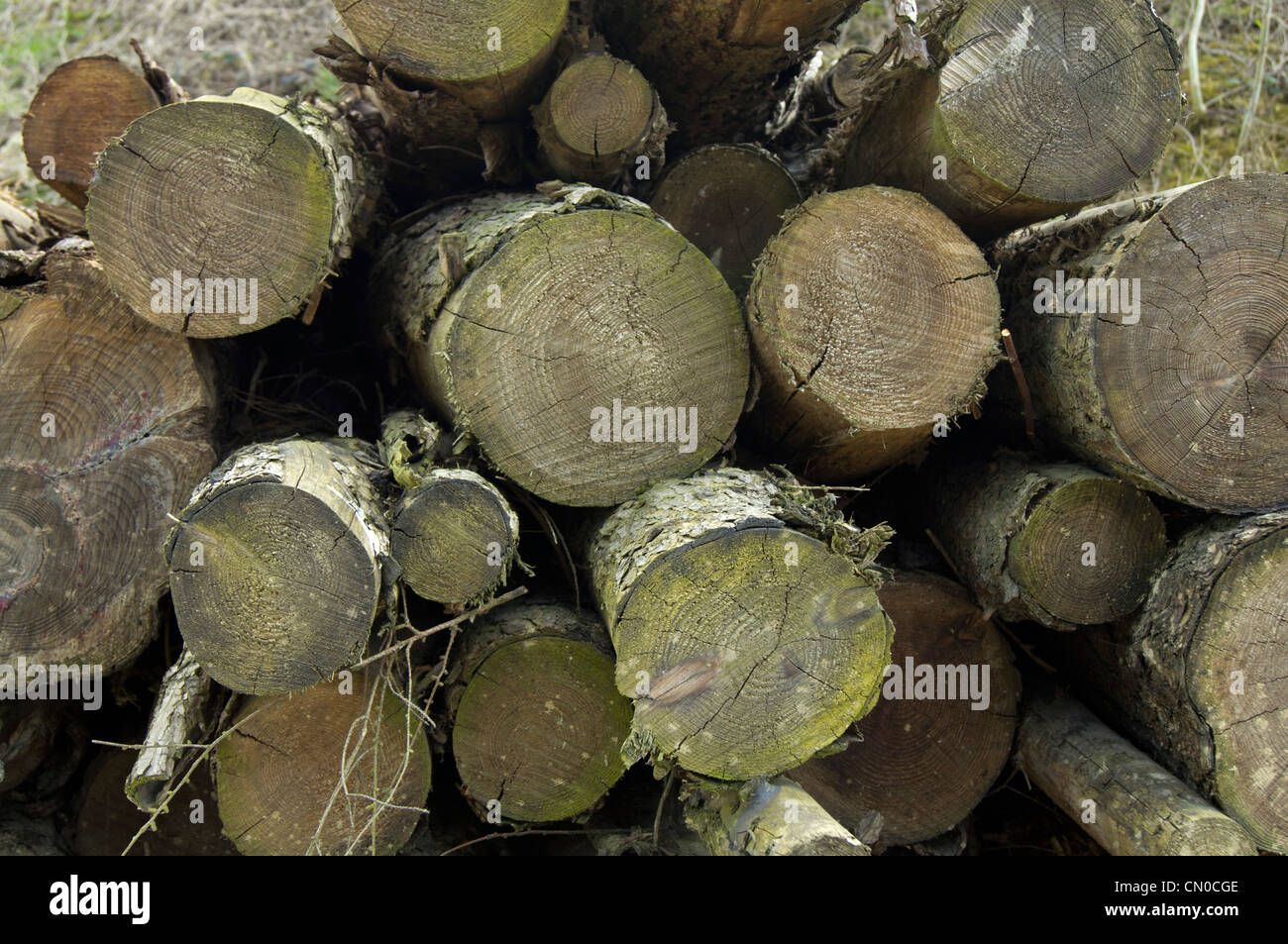 Pile of wood logs - Stock Image