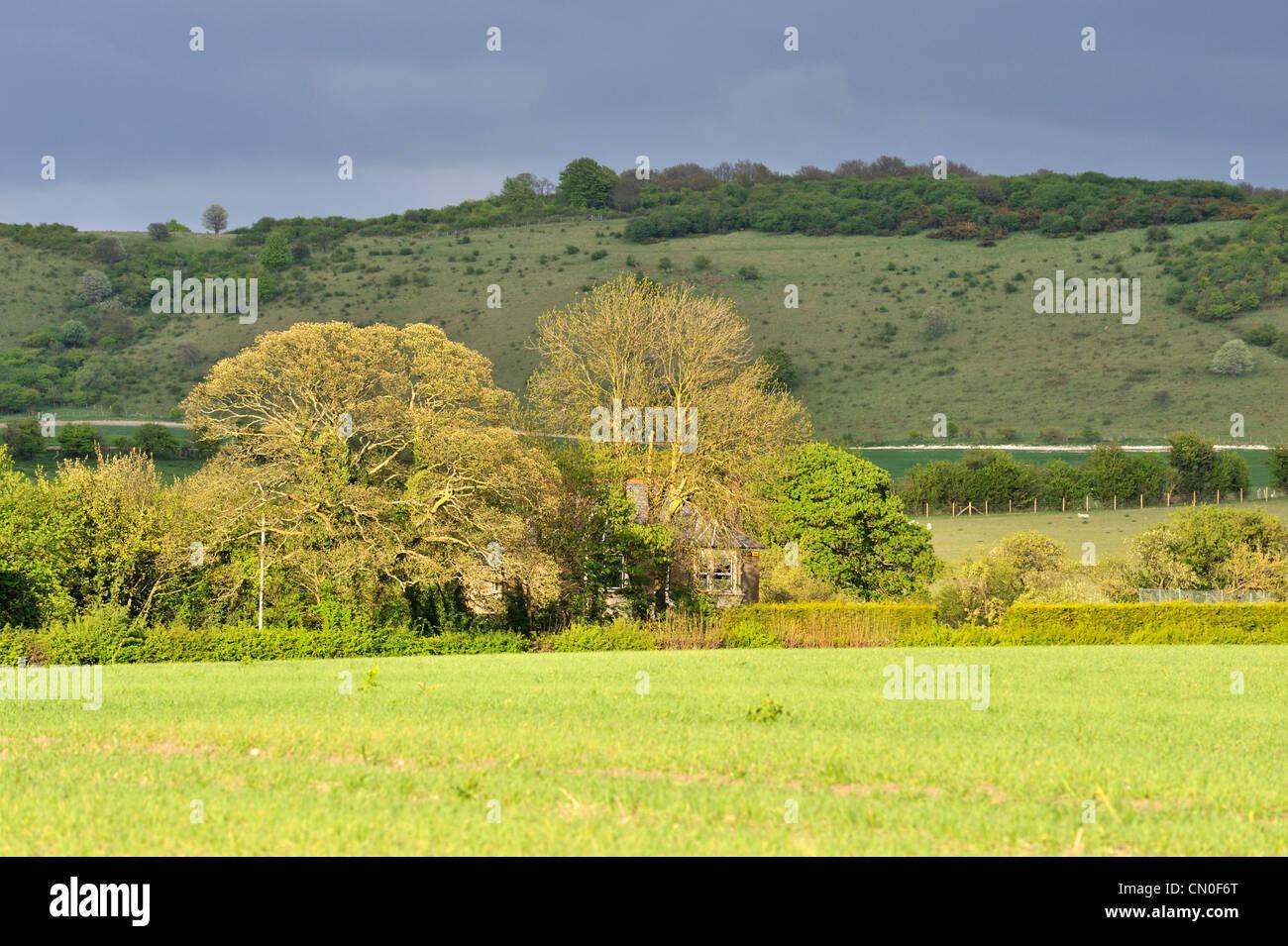 Landscape in Ivinghoe, Buckinghamshire, UK - Stock Image