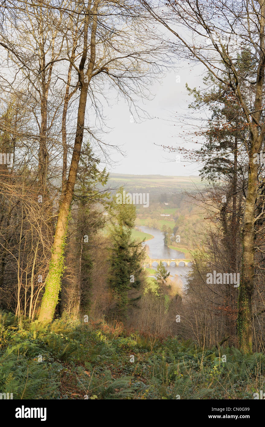 Woodland scene with view of bridge over the river Nore in Inistioge, County Kilkenny, Ireland - Stock Image