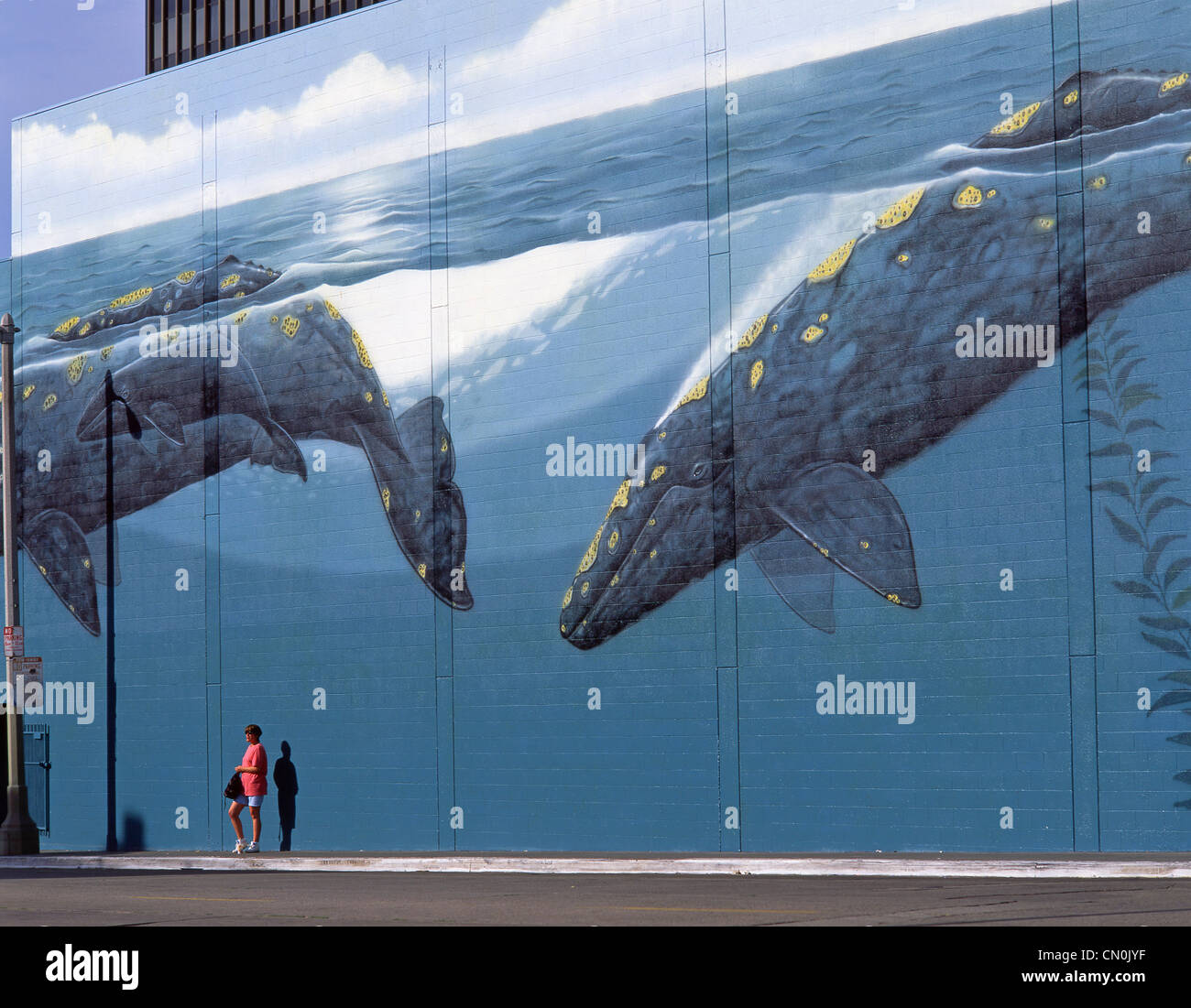 Whale wall mural, Hollywood, Los Angeles, California, United States of America - Stock Image