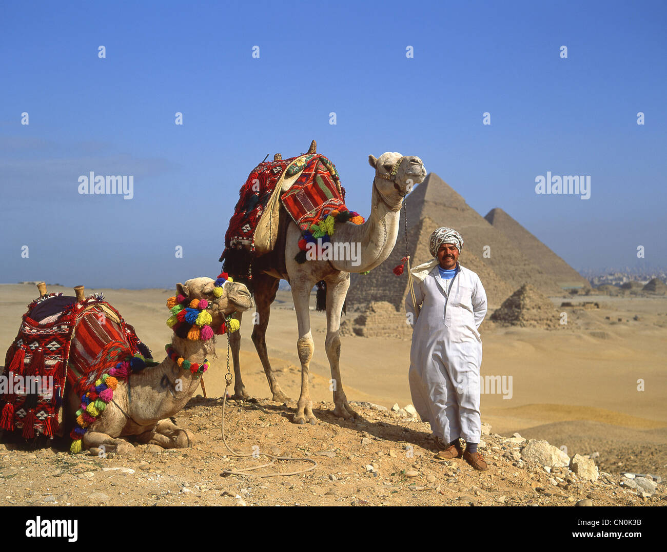 Camel driver with camels, The Great Pyramids of Giza, Giza Governate, Republic of Egypt - Stock Image