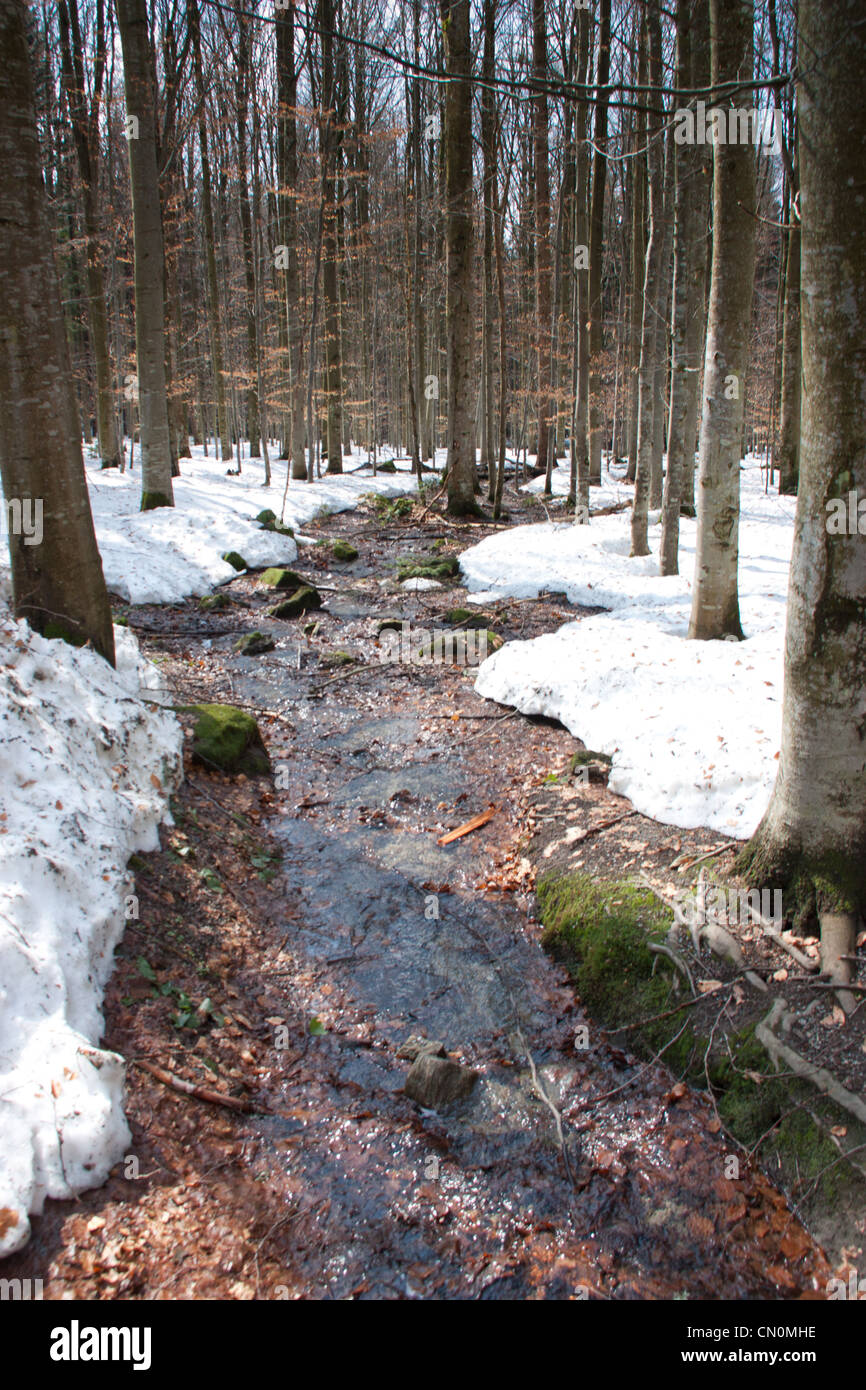Stream in forest - Stock Image
