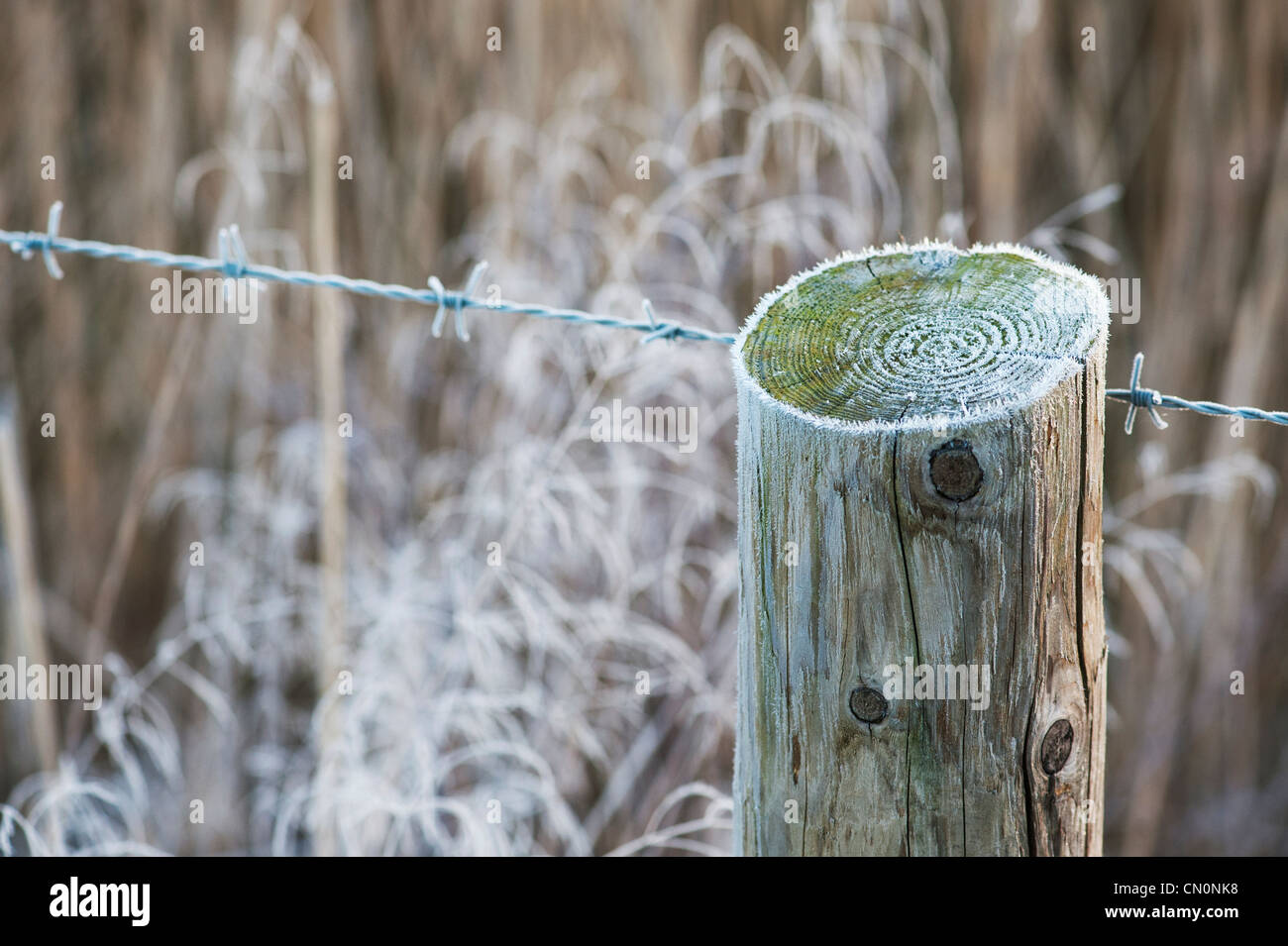 Frosty barbed wire and fence post in the english countryside. Shallow DOF - Stock Image