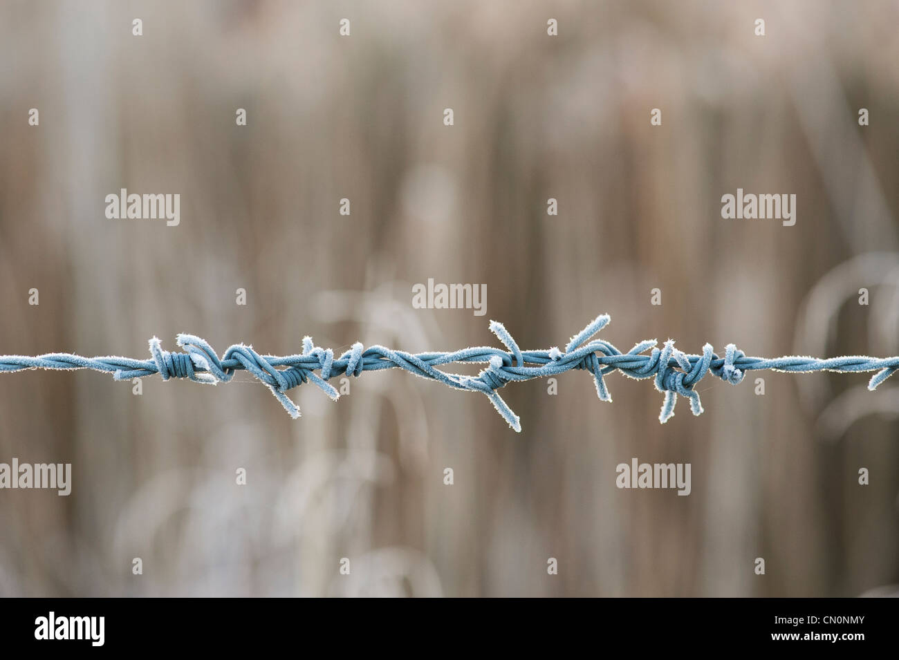 Frosty barbed wire. - Stock Image