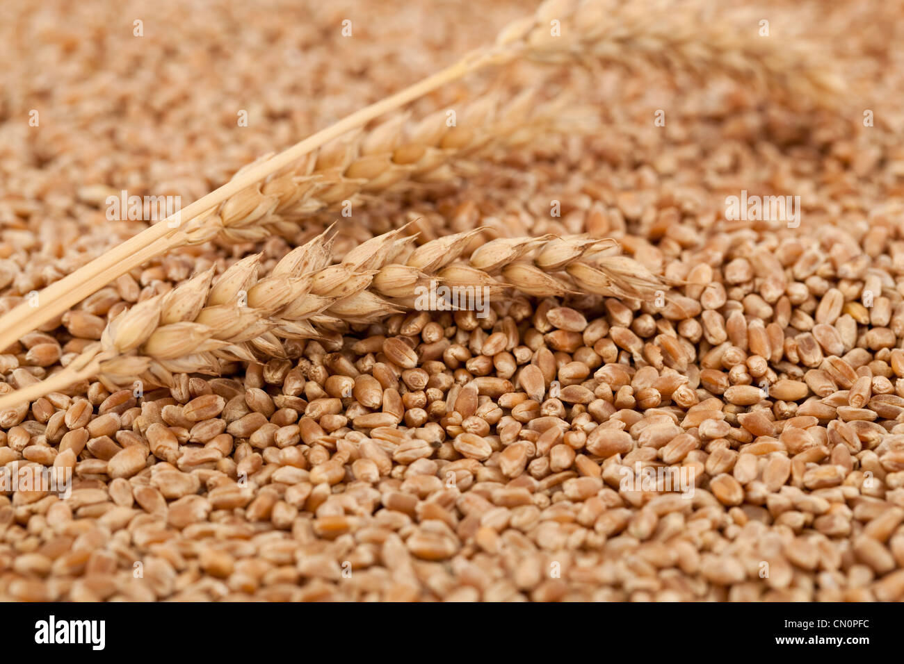 dry and raw wheat as background - Stock Image