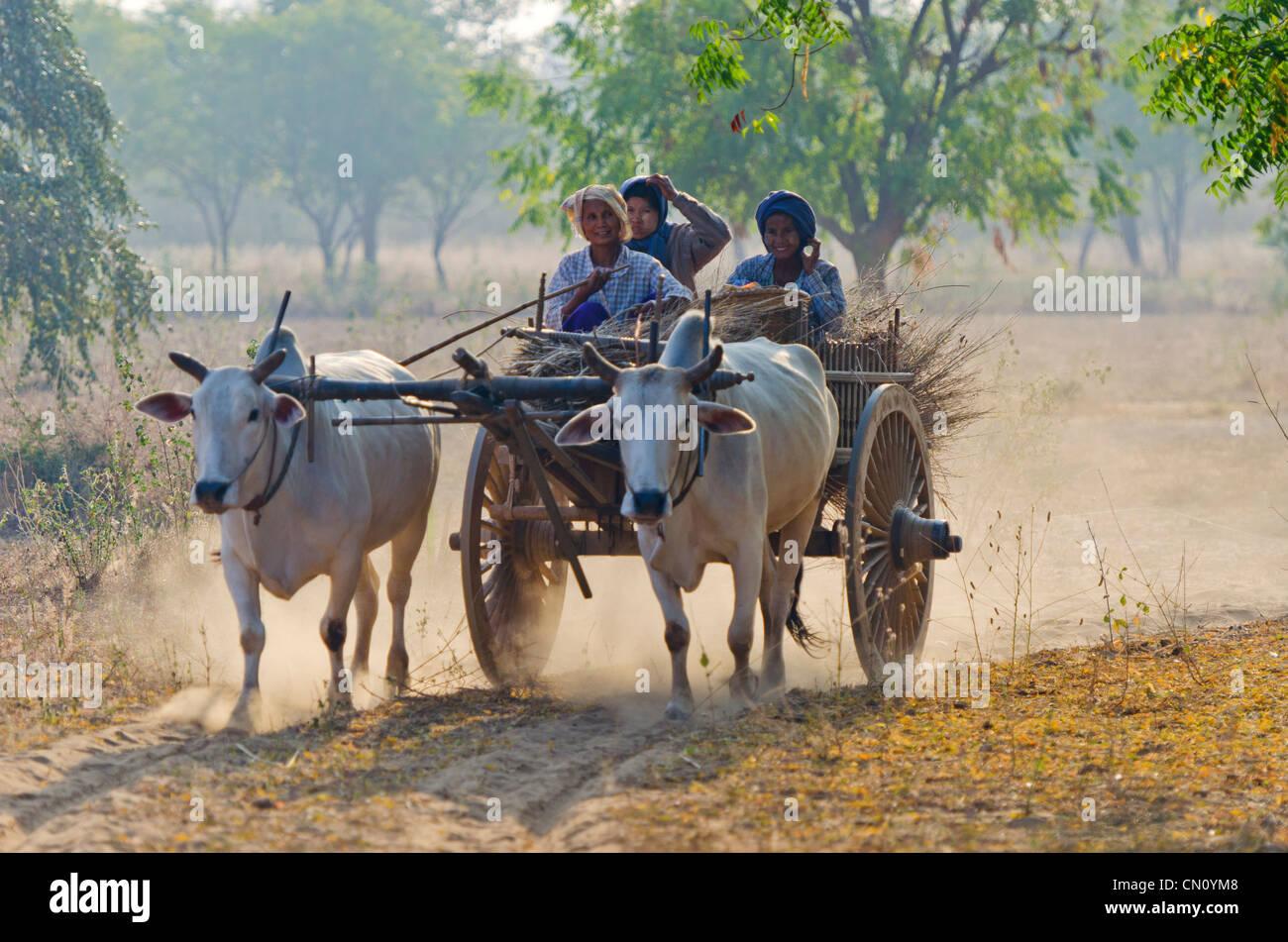 Ox Cart, Bagan, Myanmar - Stock Image