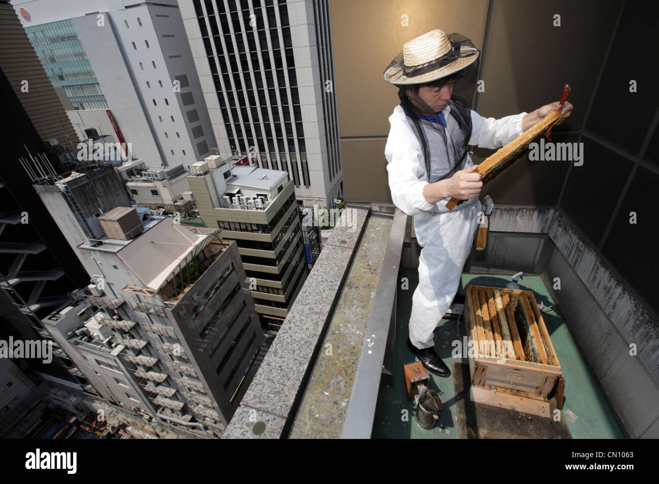 Mr. Tanaka of 'Ginpachi' (short for 'Ginza Mitsubachi', or 'Ginza honeybee'), take care of 300,000 Western and Japanese - Stock Image