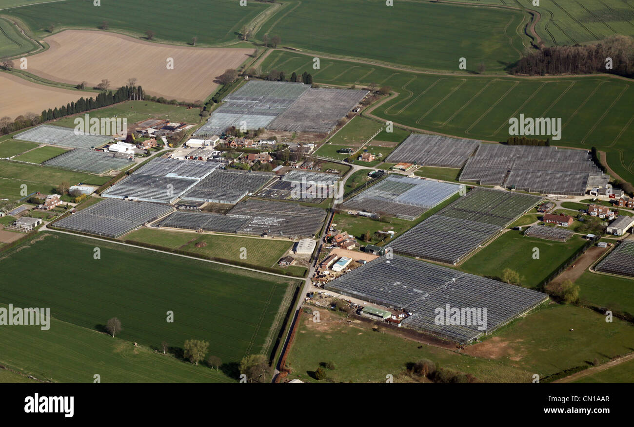 Aerial view of acres of commercial greenhouses - Stock Image