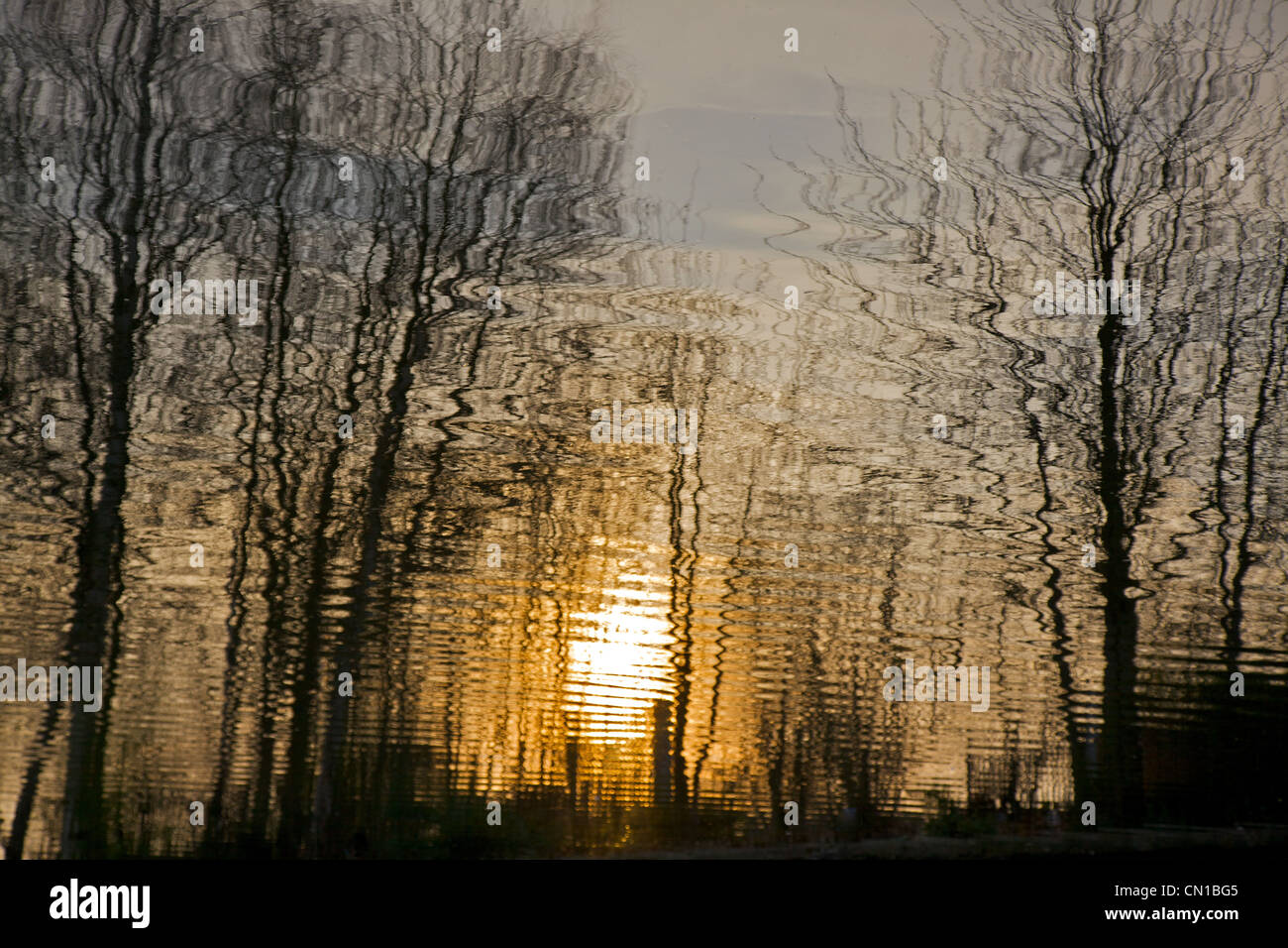 Reflections in the Grand Union canal at sunset, Hertfordshire, England - Stock Image