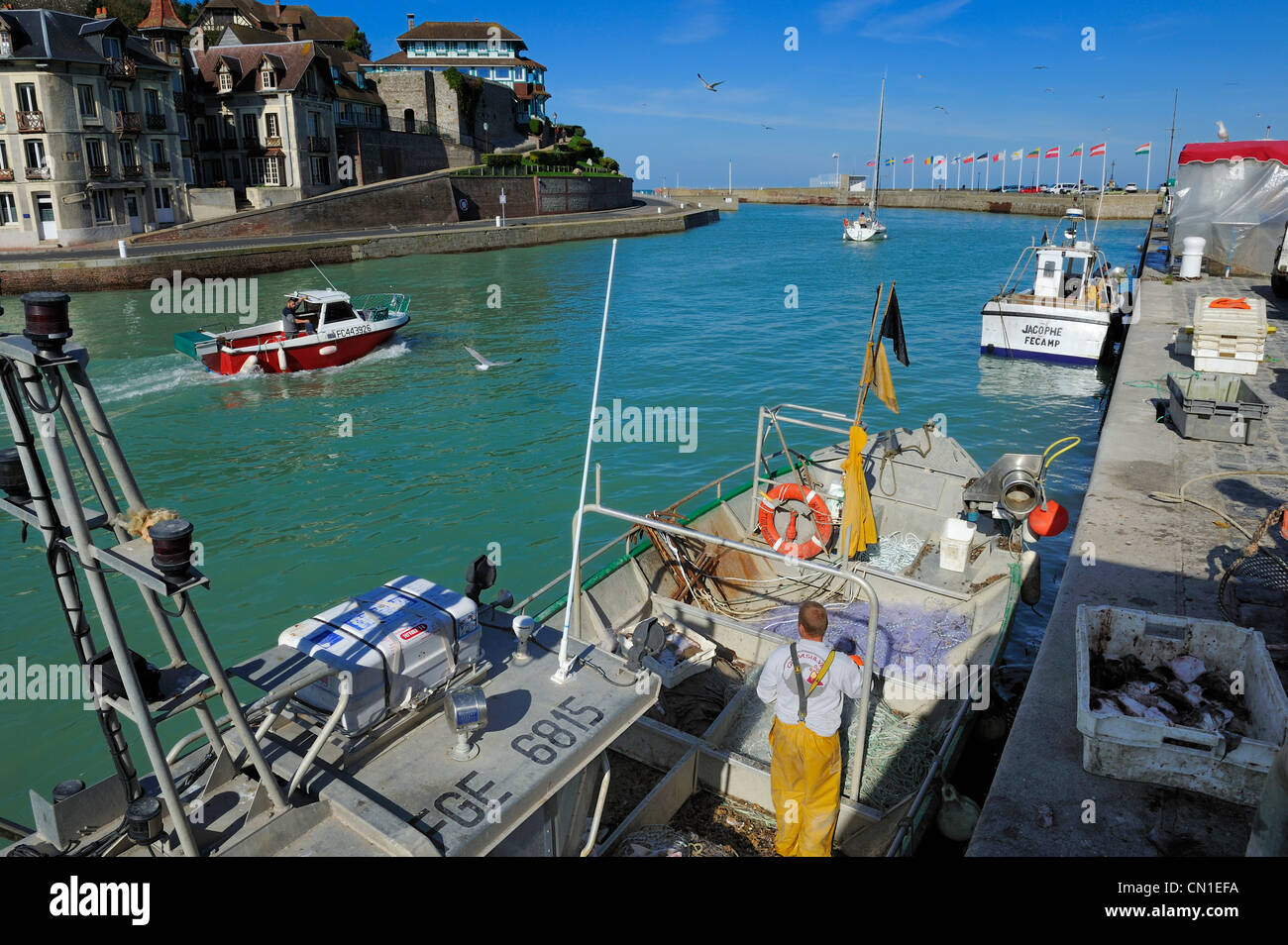 France, Seine Maritime, Saint Valery en Caux harbour, unloading of the catch of the day - Stock Image