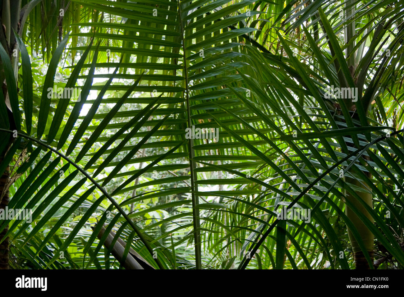 Plant Leaves and Fronds - Stock Image