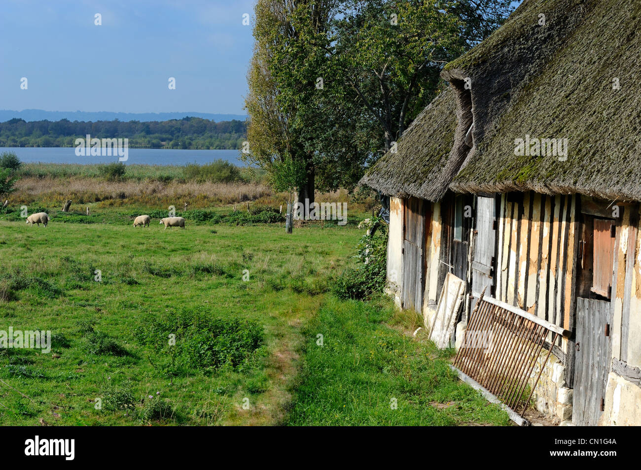 France, Eure, Marais Vernier, traditional timbered and thatched roof house, the Big Pond (Grande Mare) in the background - Stock Image