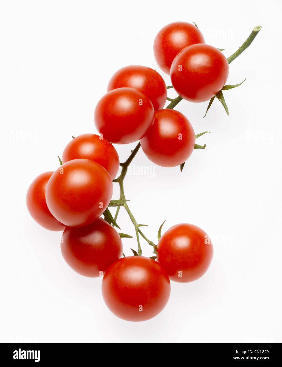 Stem of Several Cherry Tomatoes on Vine - Stock Image
