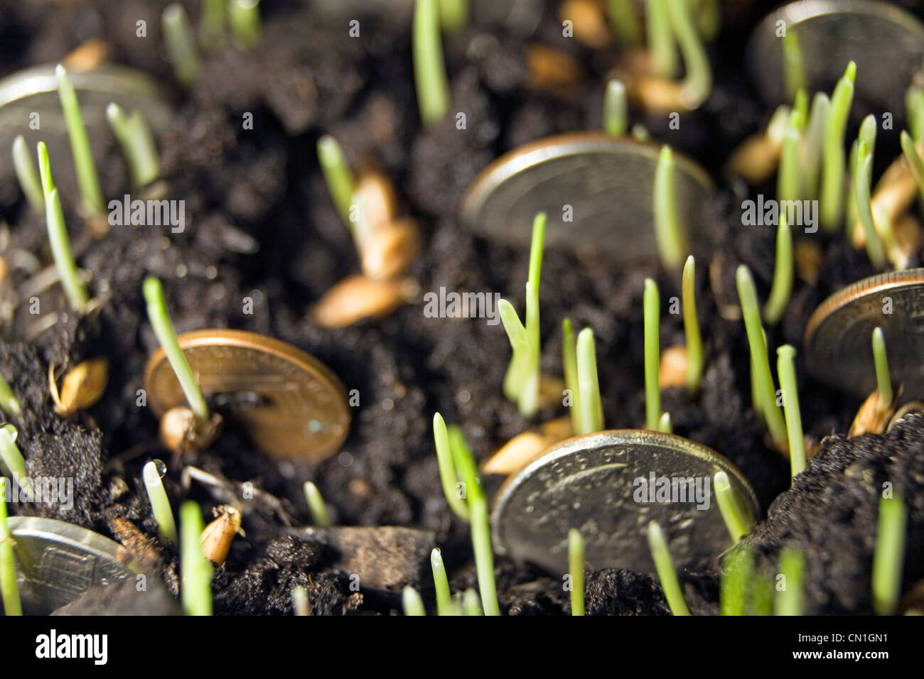Coins Growing in Soil - Stock Image